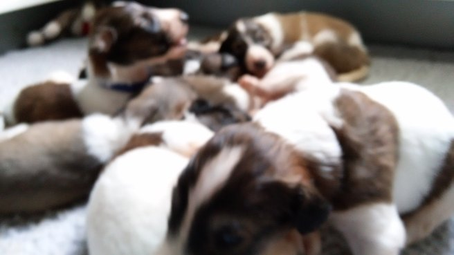 July 21 Puppy pile closeup